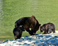 _MW15794-Red/Lucy & cubs