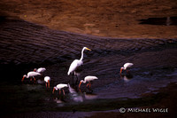 Egret and Ibises (15-34-01).jpg